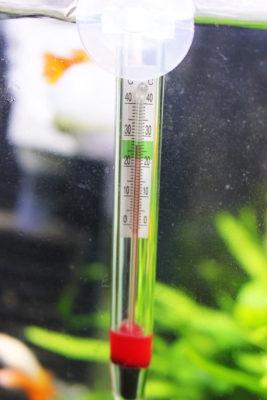 グッピー水槽の温度計
