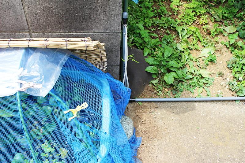 エアー配管で繋げた金魚水槽