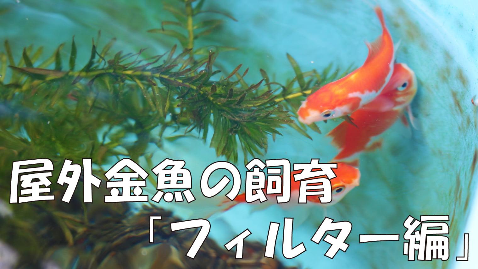 屋外金魚の飼育「フィルターについて」